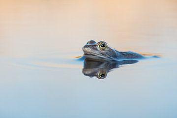 Heikikker in het water van Elles Rijsdijk