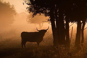 Schotse Hooglander in de mist van Ruud Jansen