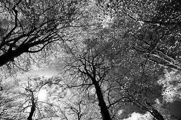 Bomen von Frank de Ridder