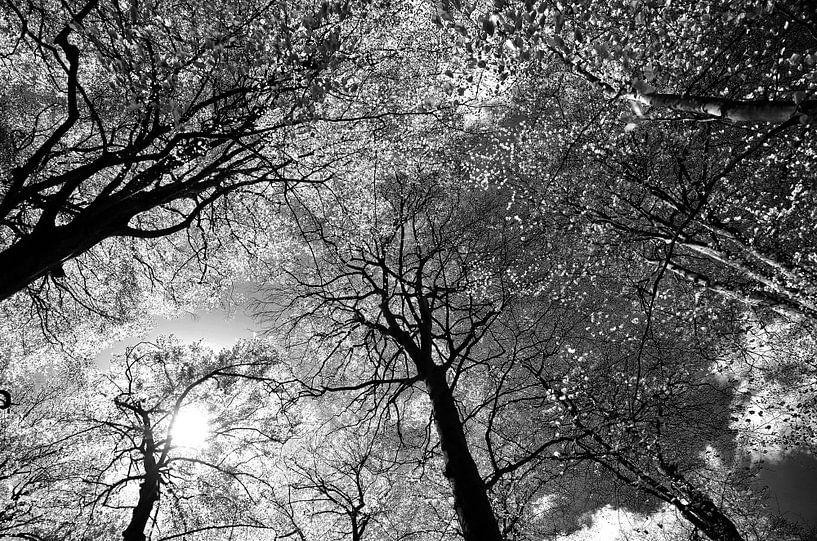 Bomen van Frank de Ridder