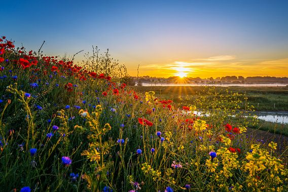 Poppy Colors II van Sander Peters Fotografie