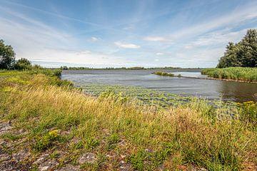 Aan de rand van de Nederlandse rivier Amer van Ruud Morijn