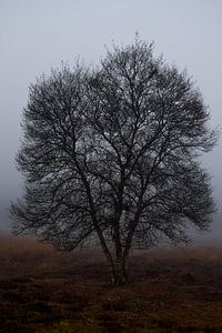 Foggy morning van Celyn Vries