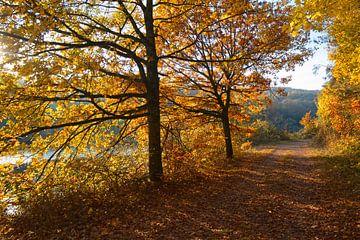 Herbst an der Saar von Carole Winchester
