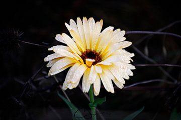 Blume im Herbst  von Christina Sudbrock