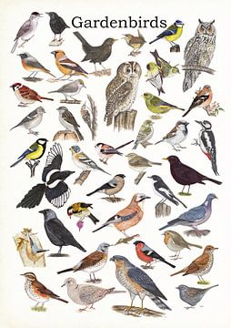 Gartenvögel von Jasper de Ruiter
