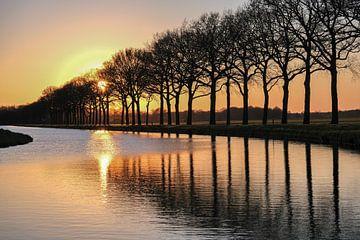 Sunny evening van Ilma Meijer