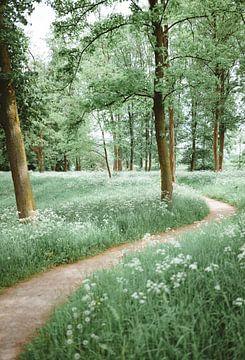 Eine grüne Straße von Wahid Fayumzadah