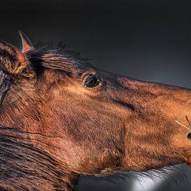 Paard al grasetend in het avondlicht met een donkere achtergrond van Harrie Muis