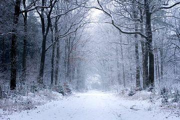 Winter im Wald von Karijn Seldam