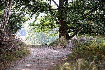 Waldweg von Zus en Zo Foto