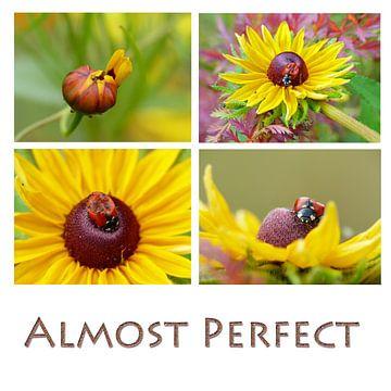 Collage gele bloemen met lieveheersbeestje met tekst van Gonnie van Hove