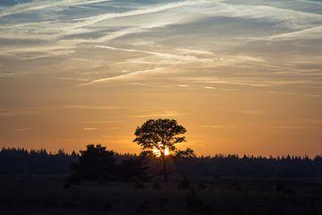 Landschaft mit untergehender Sonne hinter Eiche von Ger Beekes