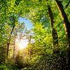 Forest van Günter Albers thumbnail