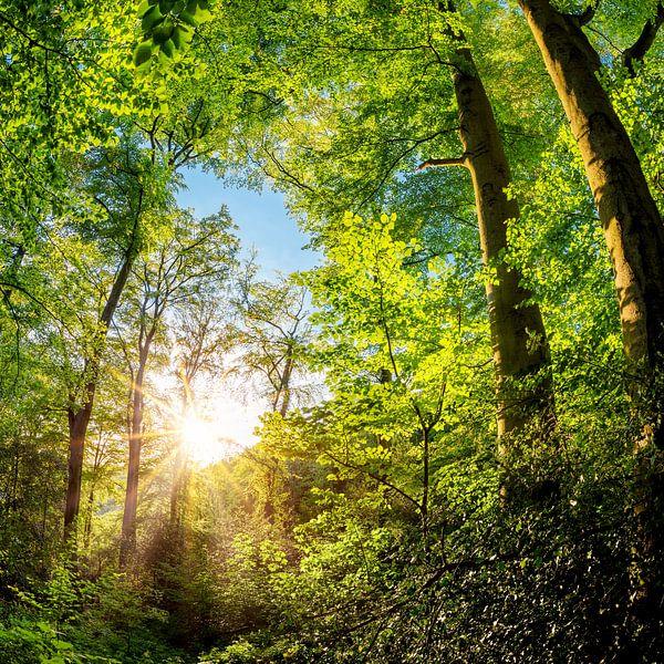 Forest van Günter Albers