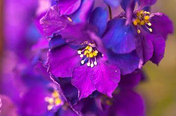 Bloem paars/blauw van Agnes Meijer