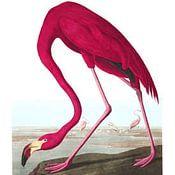 Birds of America Profilfoto