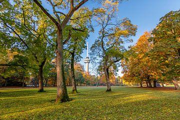 L'Euromast vu à travers les arbres dans le Parc sur Annette Roijaards