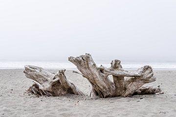 Drijfhout op het strand van Tony Buijse