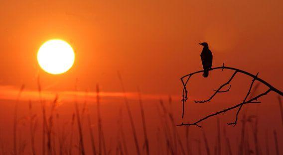 Zonnevogel van Remco Stunnenberg
