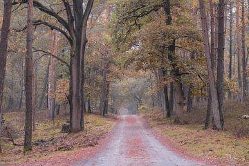 herfstkleuren in het Deelerwoud van Tania Perneel