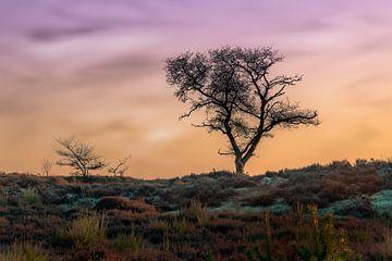 Baum auf einem Hügel von Tim Abeln