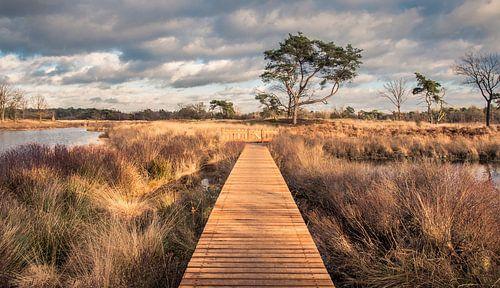De natuur in over het hek, bij De Malpie in Noord-Brabant