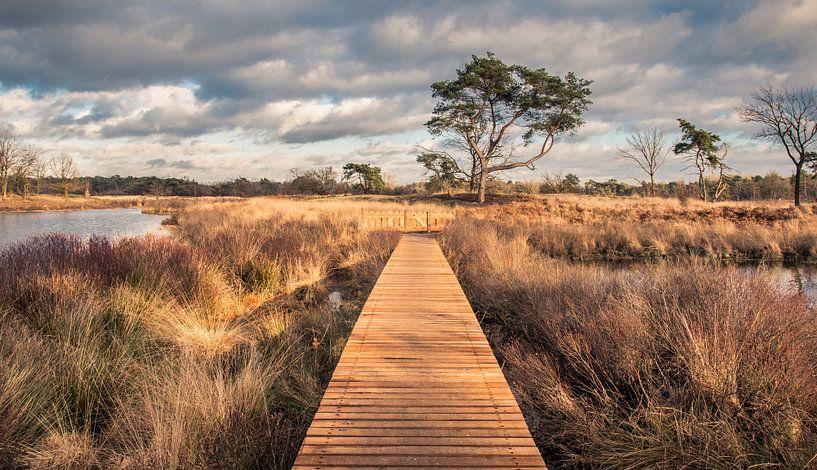 De natuur in over het hek, bij De Malpie in Noord-Brabant van Sven Wildschut