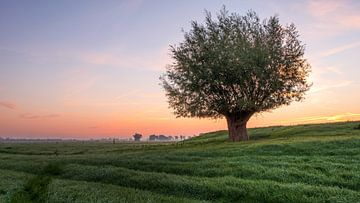 Een alleenstaande boom in het weiland tijdens een zonsopkomst van Erik Graumans