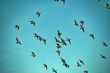 vogelvlucht in blauwe lucht van wil spijker