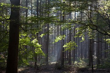 Zonnestralen in het bos von Arthur van Iterson