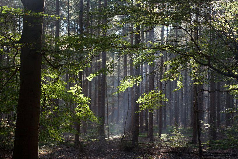 Zonnestralen in het bos van Arthur van Iterson