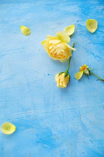 Gele Rozen, roos op een blauwe achtergrond van Beeldig Beeld