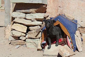Boliviaans hondje van Marieke Funke