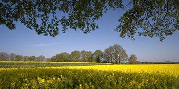 Lenteveld in Twente von Remco Nijland