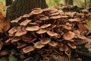paddenstoelengroep in het bos von nikita van der Starre- Zagers