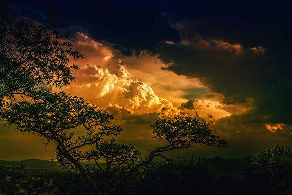 Zonsondergang door de bomen van Rolf Linnemeijer