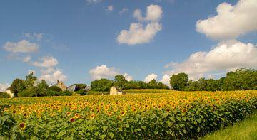 Sonnenblumen im Frankreich von Birgitte Bergman