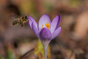 Die Biene schmeckt es fast schon. von Stephan Scheffer