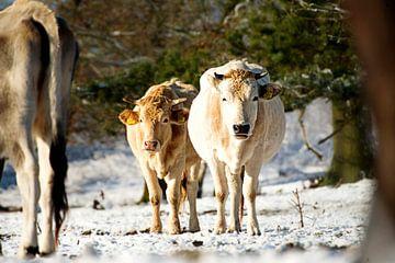 Nederlands winterlandschap van hesterheleen fotografie