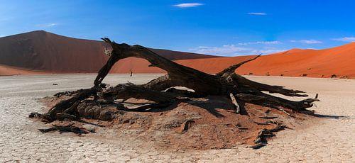 Geblakerd hout in de Deadvlei, Namibië