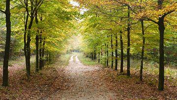 Herfst, lichtval, bos, natuur, veluwe sur Gijs van Veldhuizen