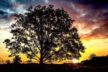 Bäume_02 von Johan Honders