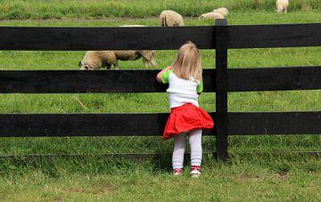 Mädchen betrachtet Schafe durch einen Zaun von Mathieu van den Berk
