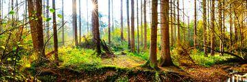 Zonnestralen in het herfstbos van Günter Albers