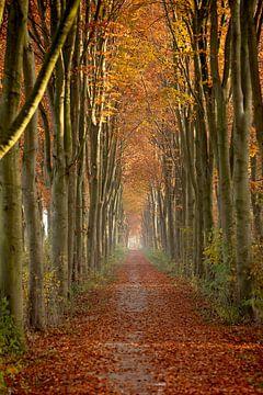 Herbst von Ema Erkens