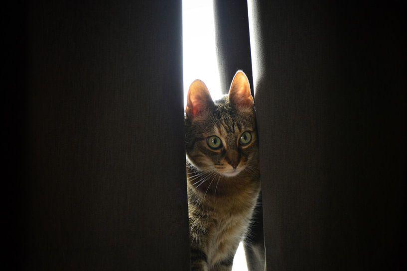 Glurende kat van Evelien Doosje