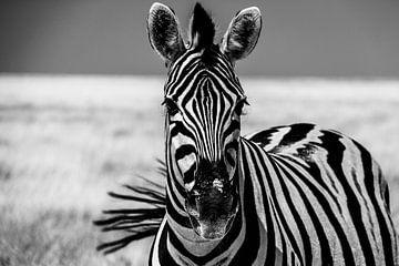 Zebra met zwiepende staart van Marit van de Klok