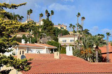 Des maisons de vacances de luxe entre les palmiers pour l'hiver sur la Costa Blanca
