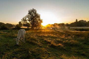 Zonsopkomst   -  Meditatie- Morgenrood-Tegenlicht van Angelina Van Exsel